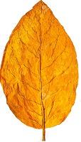 tobbaco-leaf