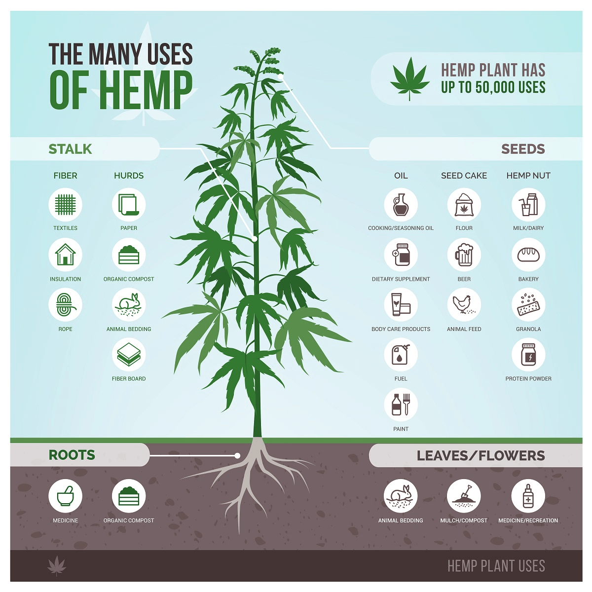 Uses of Hemp Oil